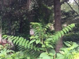 Casa 6 camere Cotroceni renovabila teren 316mp