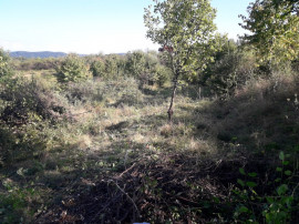 Teren Valea Rusului
