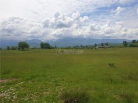 Teren Intravilan Valea Avrigului
