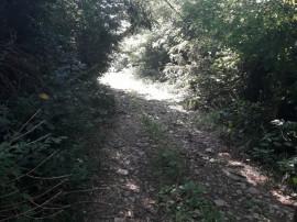 12 hectare livezi si padure in Susenii Bargaului