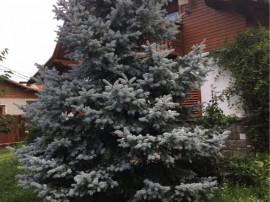 Vila 6 camere de închiriat Ploiesti