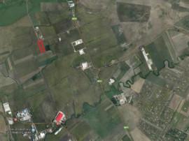 Teren 10.000 mp Timisoara - 3001092