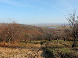3700 Mp. Teren - Podgoria - 18.500 €