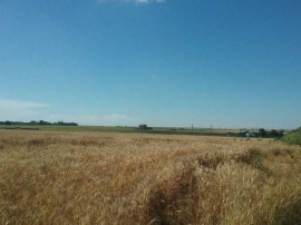 ID:12246: Teren extravilan, 2000 mp, Techirghiol, Constanta