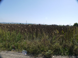 Teren intravilan,Serbanesti
