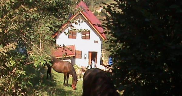 Casa, teren si padure in zona Holbav, Brasov
