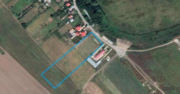 Teren Intravilan Cernica/Posta, 11.800 mp, comision 0%