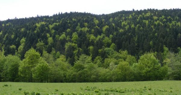 Teren Sacele- Brasov 11000 mp